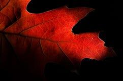 在一片五颜六色的秋天叶子的秀丽的仔细的审视 免版税库存照片
