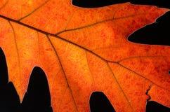 在一片五颜六色的秋天叶子的秀丽的仔细的审视 库存图片