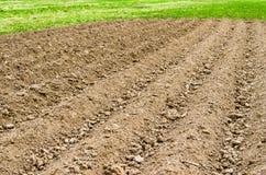 在一片农村国家设置、春天草和新鲜的庄稼的被犁的土地领域 免版税库存图片