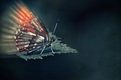 在一片叶子的五颜六色的蝴蝶在黑暗的背景 免版税图库摄影