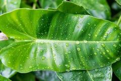 在一片叶子的水下落在雨以后 免版税图库摄影