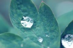 在一片叶子的露水在雨以后 免版税图库摄影