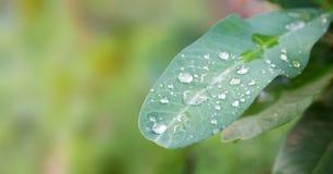 在一片叶子的露滴有模糊的背景 库存照片