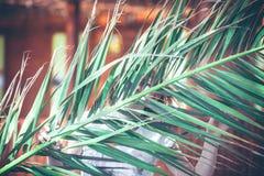 在一片巨大的热带棕榈叶后的一个女孩 免版税库存图片
