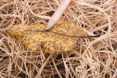 在一片干燥叶子的铅笔作为在秸杆背景的秋天 免版税库存图片