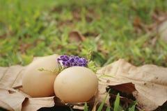 在一片棕色叶子的鸡蛋在公园 免版税库存照片