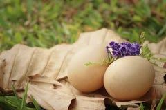 在一片棕色叶子的鸡蛋在公园 免版税库存图片