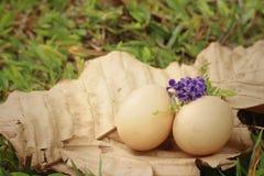 在一片棕色叶子的鸡蛋在公园 库存照片