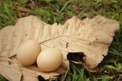 在一片棕色叶子的鸡蛋在公园 图库摄影