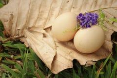 在一片棕色叶子的鸡蛋在公园 免版税图库摄影