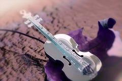 在一片紫色叶子的金黄小提琴 库存图片