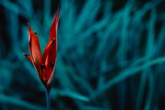 在一片绿色叶子的异乎寻常,热带和五颜六色的花 图库摄影