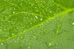 在一片绿色叶子的水下落 宏指令 库存照片