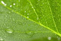 在一片绿色叶子的水下落 宏指令 图库摄影