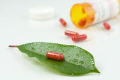 在一片绿色叶子的红色药片 免版税库存图片