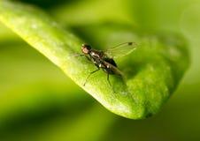 在一片绿色叶子的飞行本质上 特写镜头 免版税图库摄影