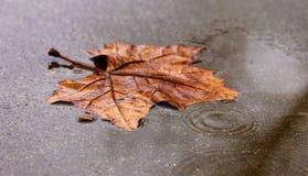 在一片美丽,充满活力的橙色叶子的雨珠在秋天 库存图片