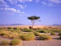 在一片绿洲的树在阿拉伯沙漠 免版税库存照片