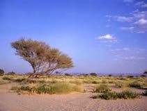 在Marib和Seyun之间的绿洲 免版税库存图片