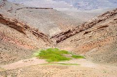 在一片绿洲的马在沙漠 免版税库存照片