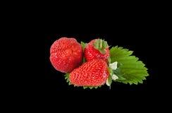 在一片绿色叶子的红色成熟草莓 查出在黑色背景 免版税图库摄影