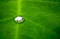 在一片绿色叶子的雨水下落 免版税图库摄影