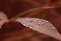 在一片绿色叶子的水下落 免版税库存照片