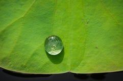 在一片绿色莲花叶子的水下落 库存图片