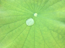 在一片绿色莲花叶子的水下落 免版税图库摄影