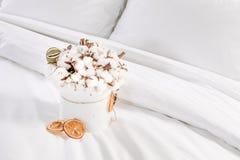在一白色bowle的原始和美丽的棉花花花束 库存图片