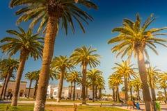 在一种热带手段的棕榈树美好的晴天 热带假期和晴朗的幸福的图象 免版税库存图片