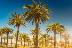 在一种热带手段的棕榈树美好的晴天 热带假期和晴朗的幸福的图象 库存照片