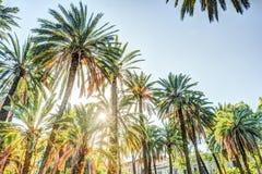 在一种热带手段的棕榈树美好的晴天 免版税库存图片