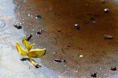 在一种生锈的金属的水背景在与一片下落的秋天叶子的雨以后在一个温暖,晴天 不同的天气情况 海 图库摄影