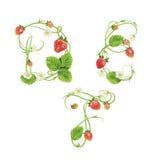 在一种草莓字体上写字 红色莓果字法字母表 果子ABC 免版税库存图片