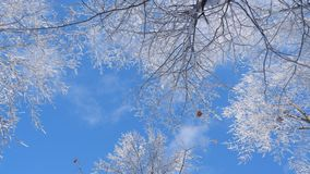 在一美丽的天空蔚蓝下的斯诺伊分支 库存照片