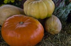 在一自然秸杆backgrou的秋天收获南瓜橙黄色 免版税库存照片