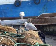 在一艘捕鱼船的捕鱼网的两只海鸥 免版税库存图片
