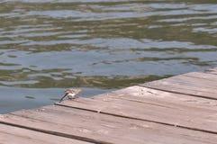在一艘木浮船的小鸟 图库摄影