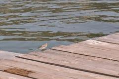 在一艘木浮船的小鸟 库存照片