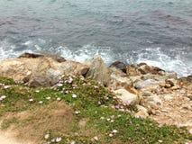 在一起生活的海岩石植物 图库摄影