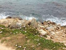 在一起生活的海岩石植物 免版税图库摄影