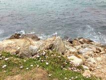 在一起生活的海岩石植物 免版税库存照片