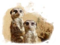 在一起看在照相机的动物园的Meerkats 免版税库存照片