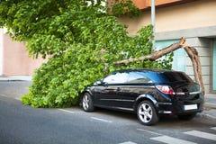 在一辆汽车的残破的树,在风暴以后。 库存照片