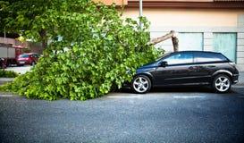 在一辆汽车的残破的树,在风暴以后。 库存图片