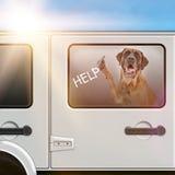 在一辆热的汽车困住的狗 库存图片