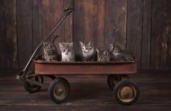在一辆生锈的无盖货车的5只可爱的小猫 免版税库存图片
