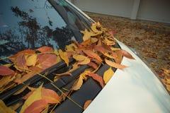 在一辆白色汽车的下落的叶子 库存图片