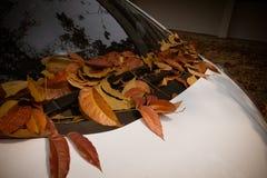 在一辆白色汽车的下落的叶子 库存照片